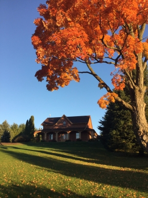 House with overhanging orange maple